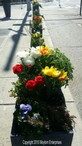 Sidewalk planter outside a local cafe