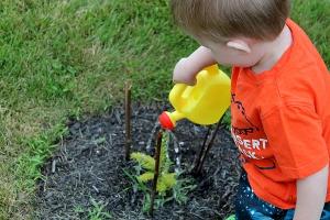 plant vs toddler